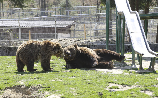 Zoo_Brasov(11)