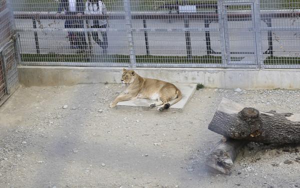 Zoo_Brasov(3)